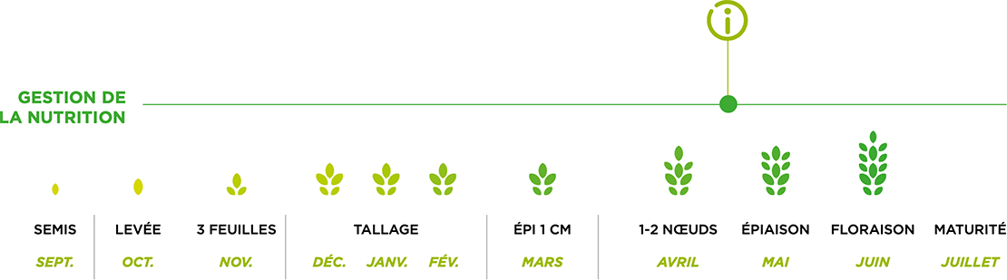 Eco details